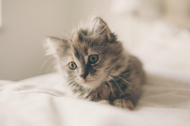 Czym karmić kotka?