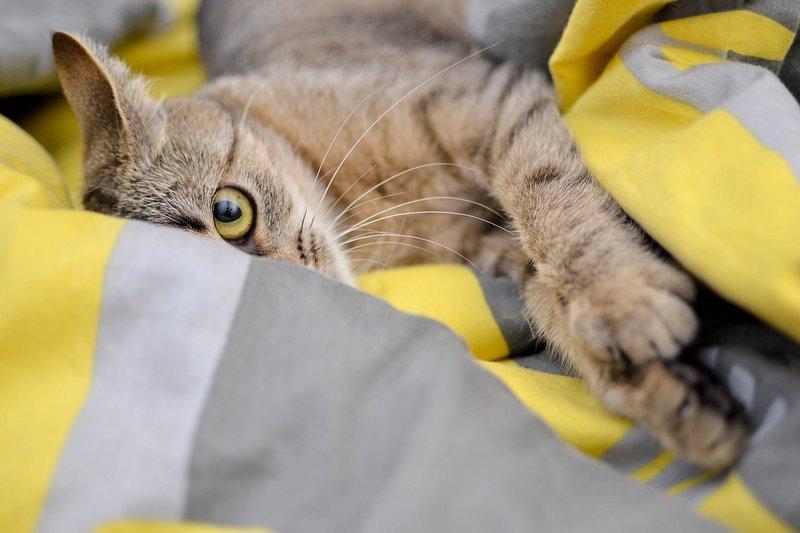 Kotka w pościeli