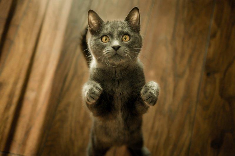 Purina dla kota